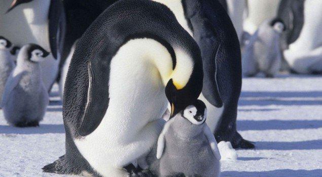 marcia-dei-pinguini
